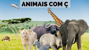 ▷ Animais Com Ç 【Lista Completa】