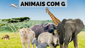 ▷ Animais Com G 【Lista Completa】