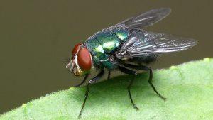 Qual o significado espiritual de ter moscas em casa?