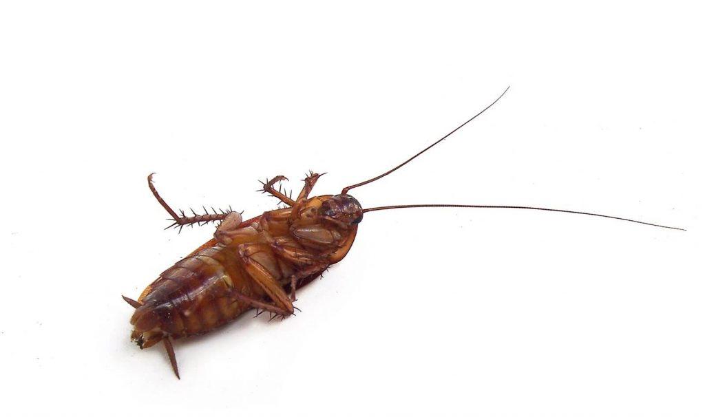 uma barata morta jogada no chão