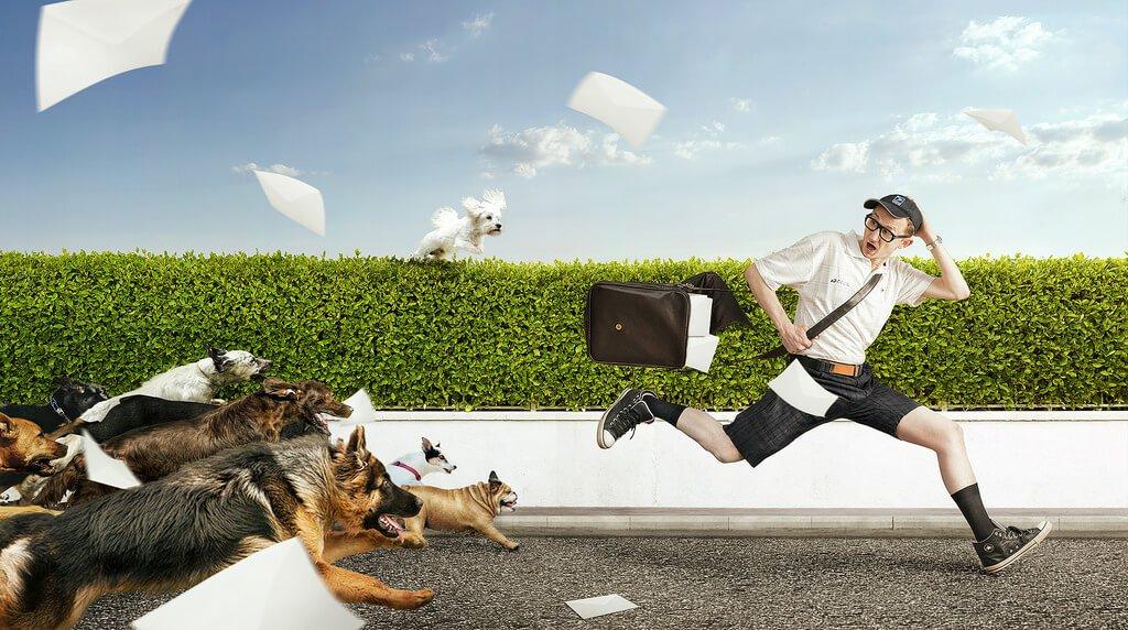 ▷ Sonhar Com Cachorro Correndo Atrás De Mim 【7 Significados】