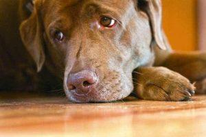 ▷ Sonhar Com Cachorro Machucado 【8 Significados Reveladores】