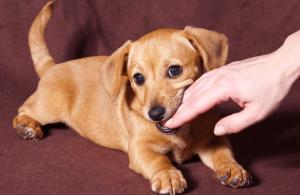 ▷ Sonhar Com Cachorro Mordendo a Mão 【8 Significados Reveladores】