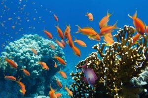 ▷ Sonhar Com Peixe Vivo 【O significado é impressionante】