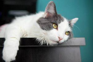 ▷ Sonhar Matando Gato 【Não se assuste com o significado】