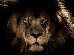 A História De O Rei Leão Seria Muito Diferente Na Vida Real, Explica Um Biólogo