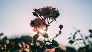 ▷ 8 Poesias Sobre a Vida Para Ler e Pensar