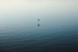 ▷ Sonhar Com Água Limpa Parada 【8 Significados Reveladores】