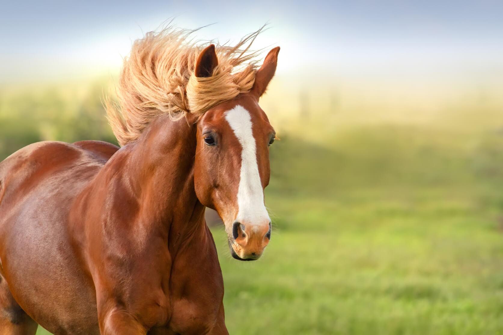 Sonhar Com Cavalo é Sorte No Jogo Do Bicho