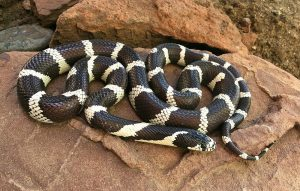 ▷ Sonhar Com Cobra Preta e Branca 【11 Significados Reveladores】