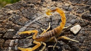 ▷ Sonhar Com Escorpião Amarelo 【7 Significados Reveladores】
