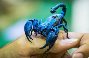 ▷ Sonhar Com Escorpião Azul 【6 Significados Reveladores】