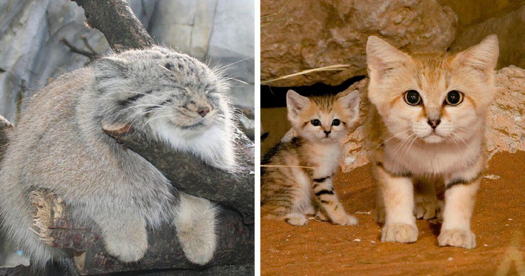 três gatinhos filhotes