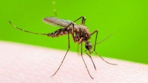 ▷ Sonhar Com Mosquito 【10 Significados Reveladores】