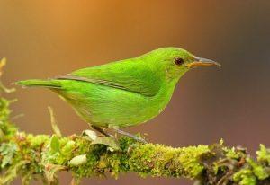 ▷ Sonhar Com Pássaro Verde 【13 Significados Reveladores】