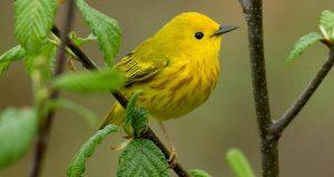 ▷ Sonhar Com Pássaro Amarelo 【8 Significados Reveladores】