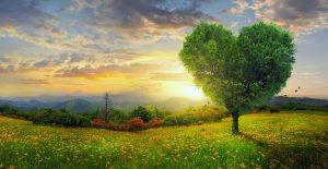 ▷ 12 Poesias Sobre Amor – Seu amor merece receber essa declaração especial