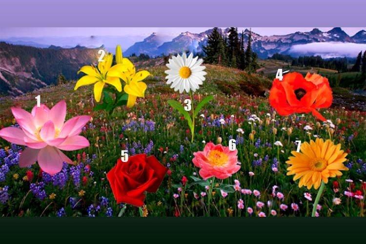 Escolha uma flor e descubra se seu desejo se tornará realidade!