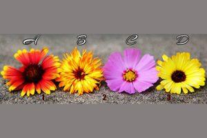 Escolha uma flor e receba uma mensagem poderosa para sua vida!
