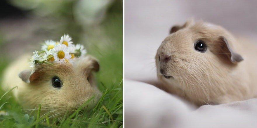 ▷ 500 Sugestões De Nomes Para Hamster – Os melhores