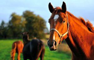 ▷ 6 Nomes De Cavalos De Filme – Escolha o seu preferido