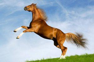 ▷ 270 Nomes De Cavalos 【Únicos e Criativos】