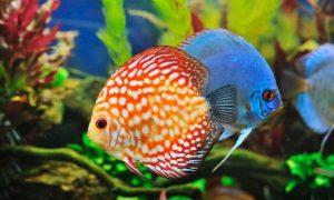 ▷ 400 Nomes Para Peixes – Difícil Escolher Só 1
