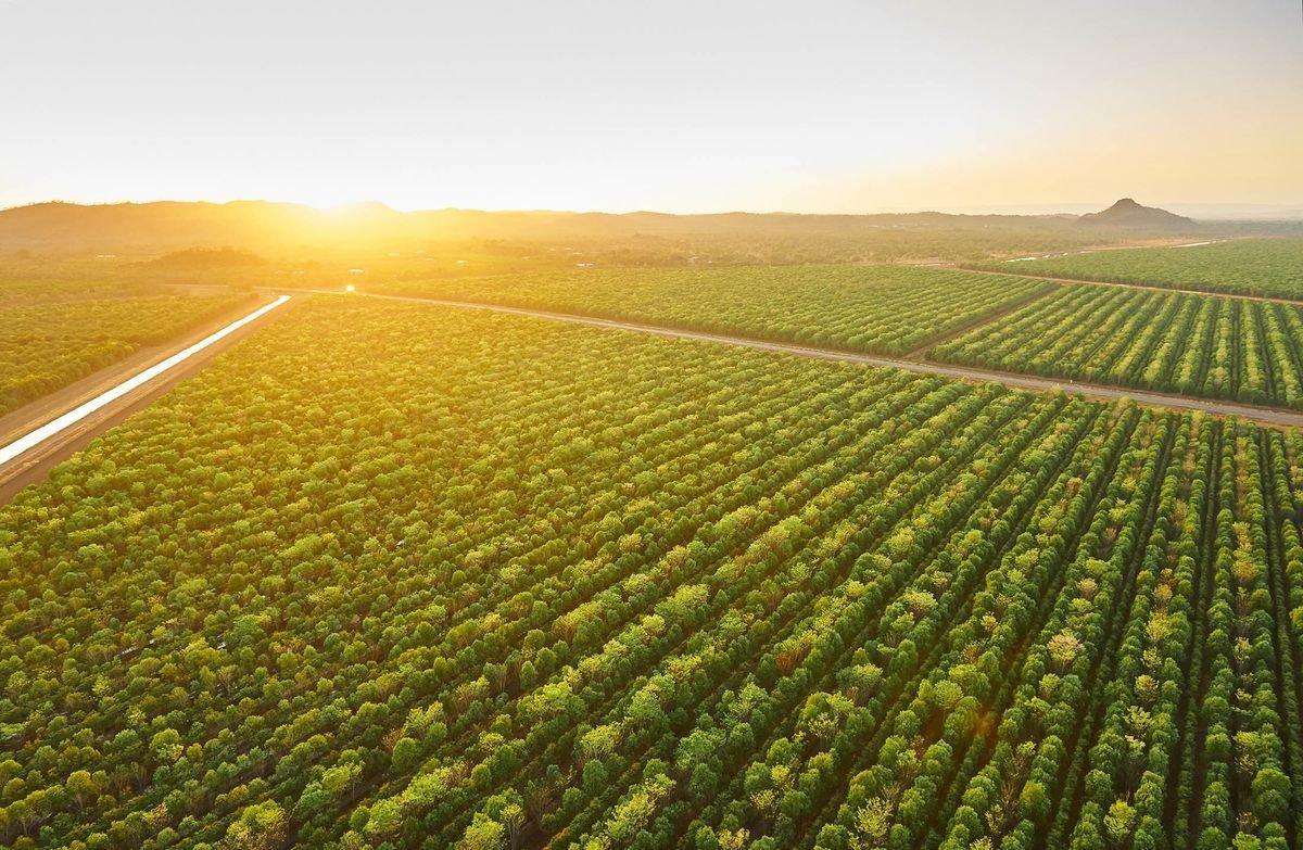 ▷ Sonhar Com Plantação é Mau Presságio?