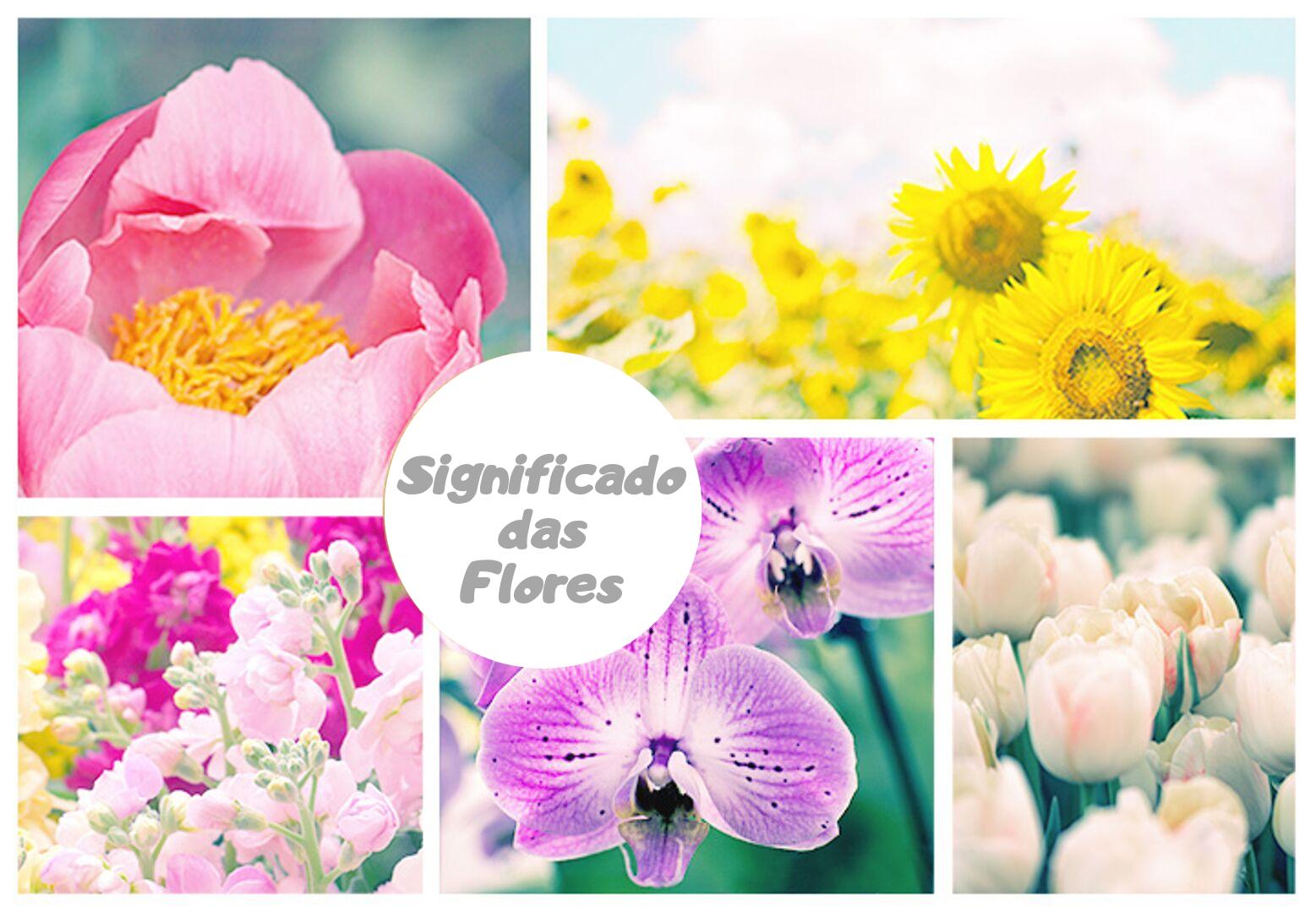 ▷ Qual o Significado Das Flores? Você vai se surpreender!