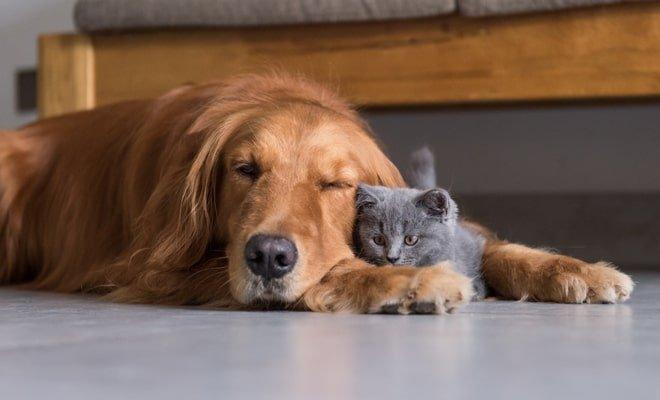 ▷ Sonhar Com Cachorro Morrendo 【É mau presságio?】