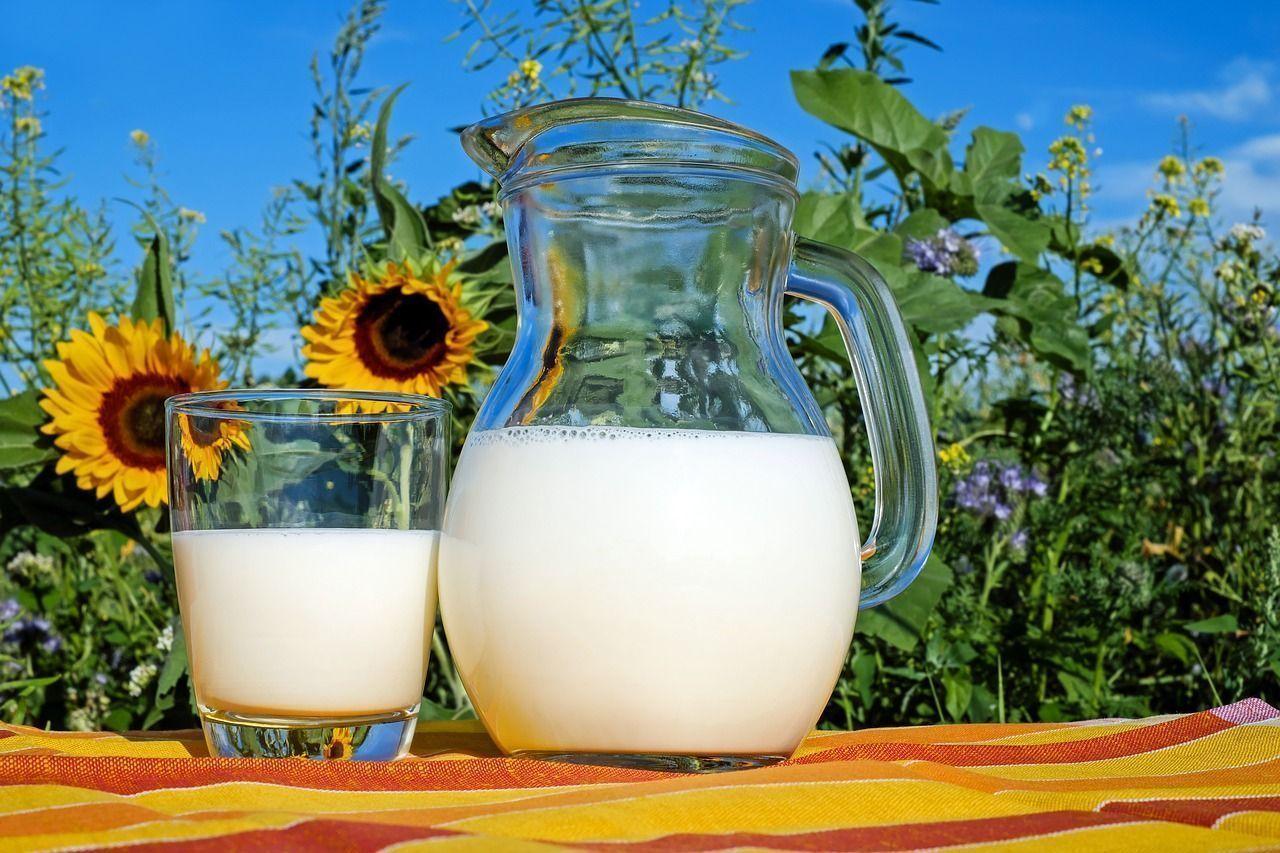 You are currently viewing ▷ Sonhar Com Leite De Vaca Significa Sorte?
