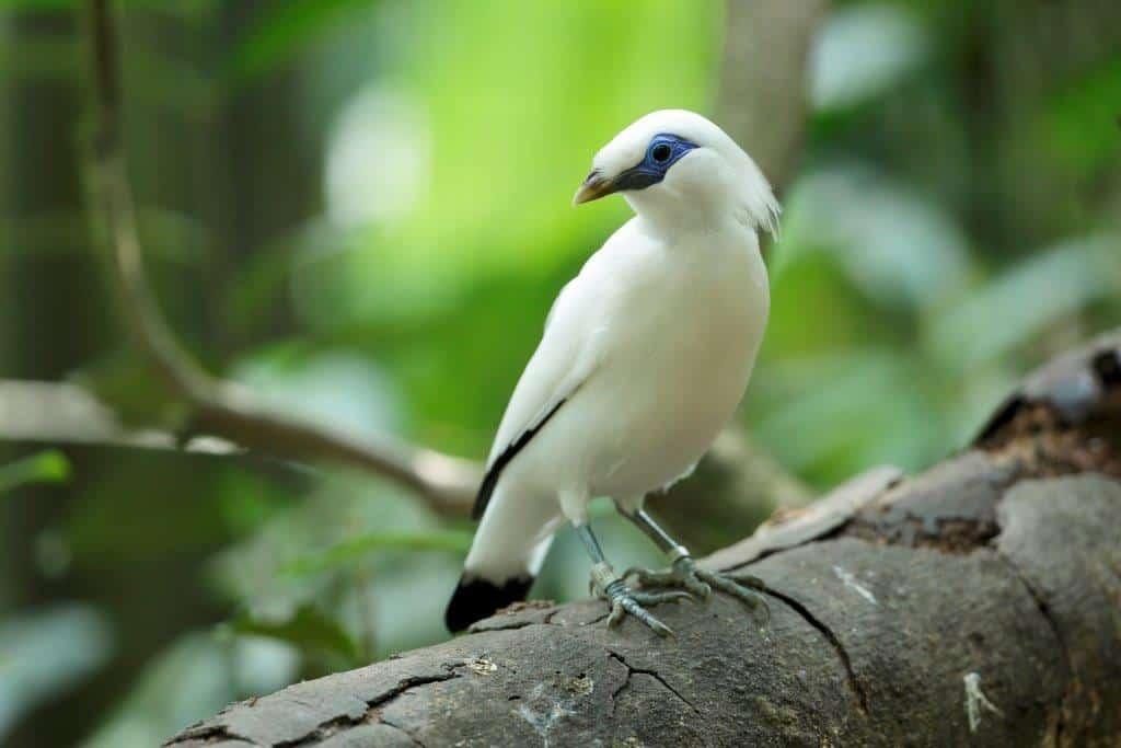 ▷ Sonhar Com Pássaro Branco 【É Mau Presságio?】