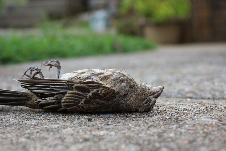 ▷ Sonhar Com Pássaro Morto é Mau Presságio?