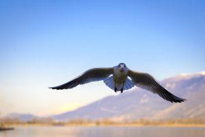 ▷ Sonhar Com Pássaro Voando  【É Sorte?】