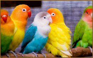 ▷ Sonhar Com Pássaros Coloridos 【É Sorte?】