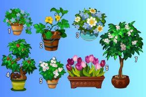 Escolha uma planta e descubra seu maior talento