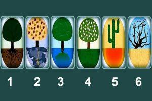 Qual árvore você escolhe? Escolha uma árvore e descubra mais sobre suas raízes!