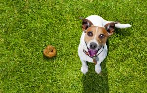 ▷ Sonhar Com Cocô De Cachorro 【É Mau Presságio?】
