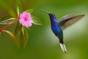 ▷ Beija-flor Significado Espiritual (Tudo O'que Você Precisa Saber)