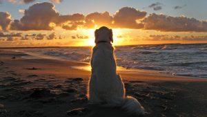 ▷ Cachorro Significado Espiritual (Tudo O'que Você Precisa Saber)
