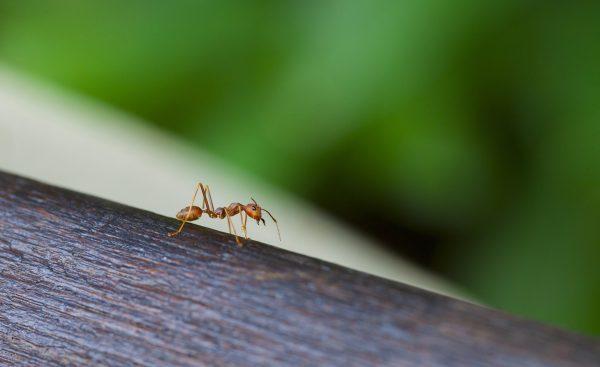 ▷ Formigas Em Casa Significado (Tudo O'que Você Precisa Saber)