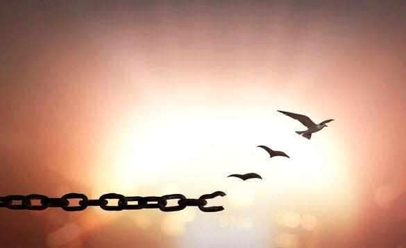 imagem representando a liberdade de alguém que perdoou