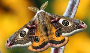 ▷ Mariposa Significado Espiritual (Tudo O'que Você Precisa Saber)