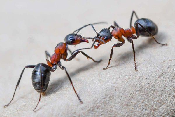▷ Significado De Formigas No Espiritismo