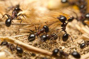 ▷ O Que Significa Formiga Na Macumba?