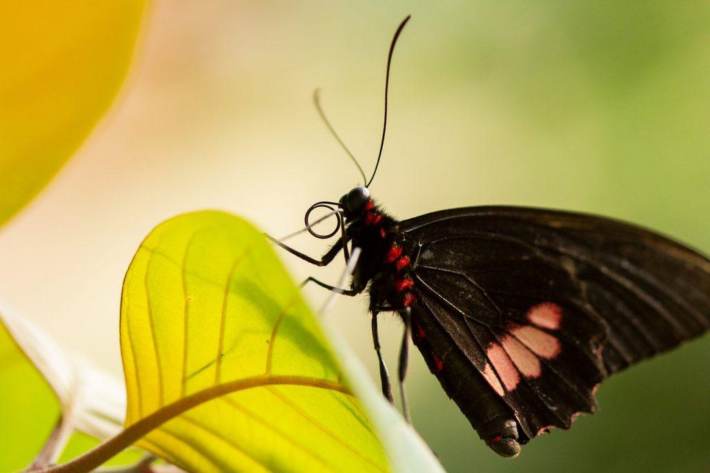 imagem de uma borboleta parada em uma folha