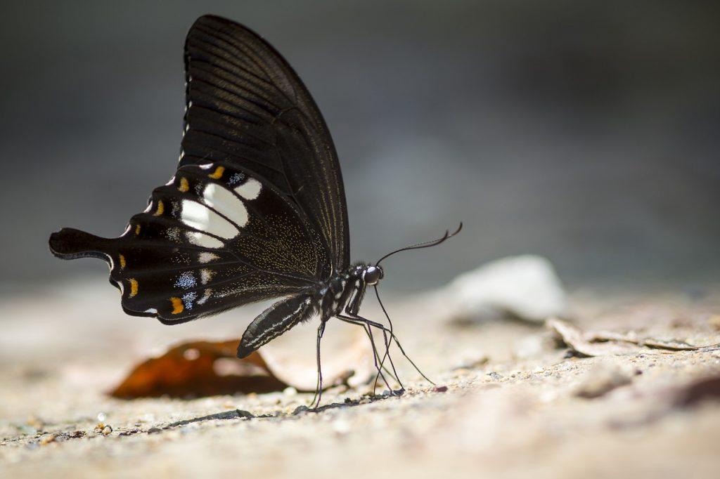 borboleta preta parada na natureza