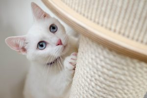 ▷ 400 Nomes Para Gatos Brancos – Ideias Criativas