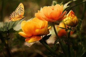 ▷ Significado Espiritual Das Borboletas (Impressionante)