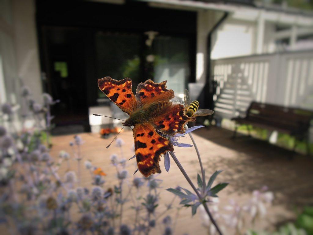 borboleta-dentro-de-casa-o-verdadeiro-significado